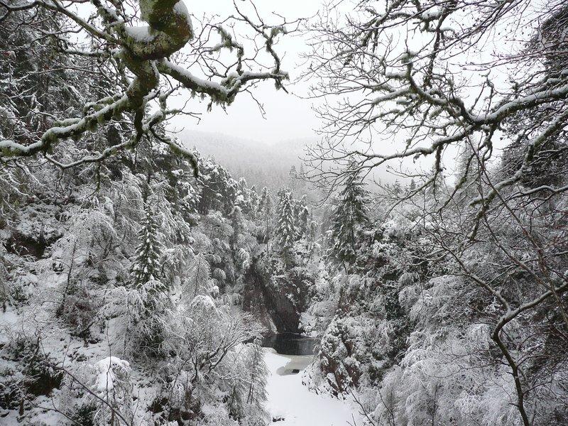 Vue d'hiver de la gorge du jardin.