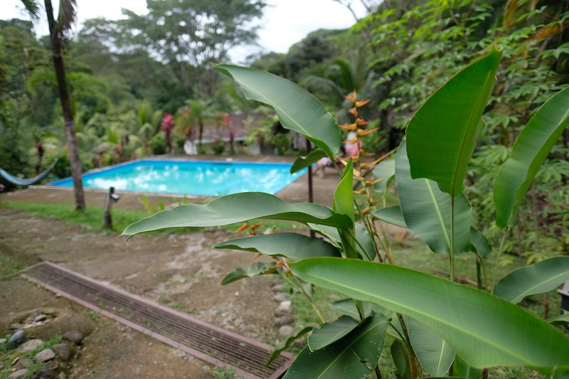 Chilantro Private and Dorm Rooms, Ojochal, Costa Rica, holiday rental in Ojochal
