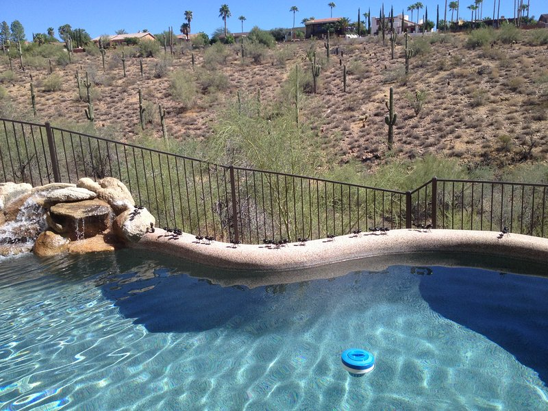 Fantastic Fountain Hills, vacation rental in Fountain Hills