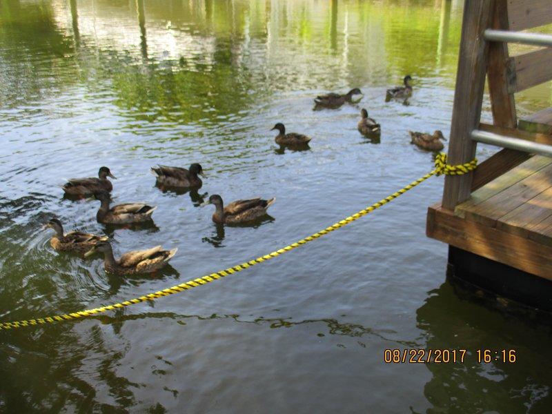 dockside visitors