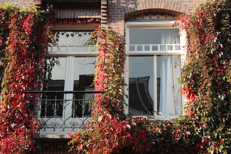 Lovely, bright apartment near Vondelpark & major art museums, alquiler vacacional en Osdorp