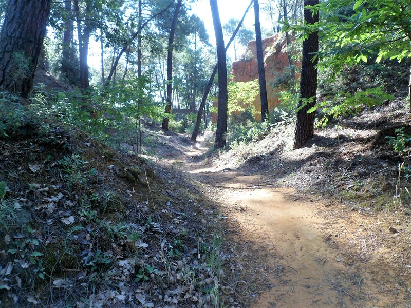 in the pine forest, path for access to the pool