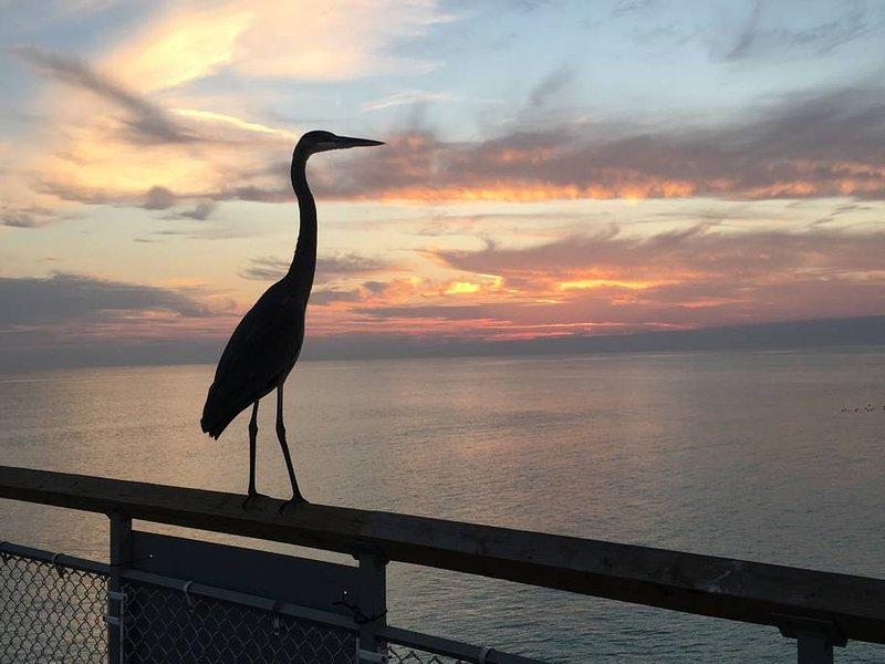 Heron enjoying Sandpiper Sunset