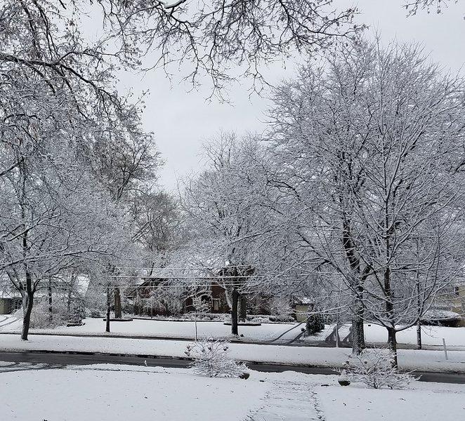 Front yard winter wonderland