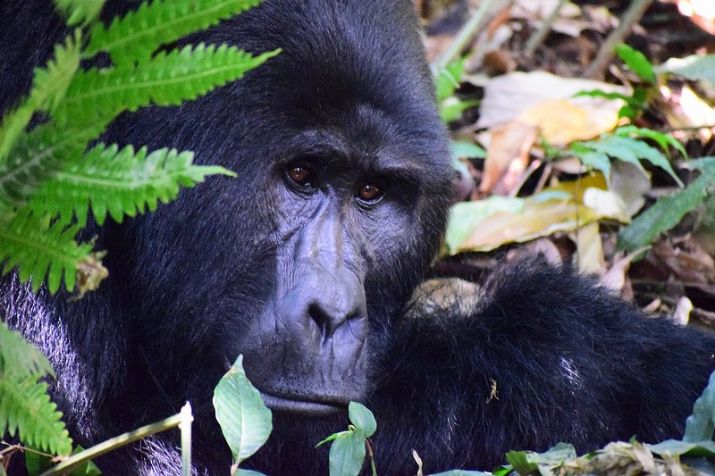Our photo from the Bwindi forest