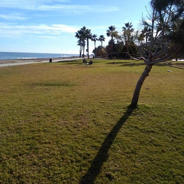 Lawn parallel to the beach