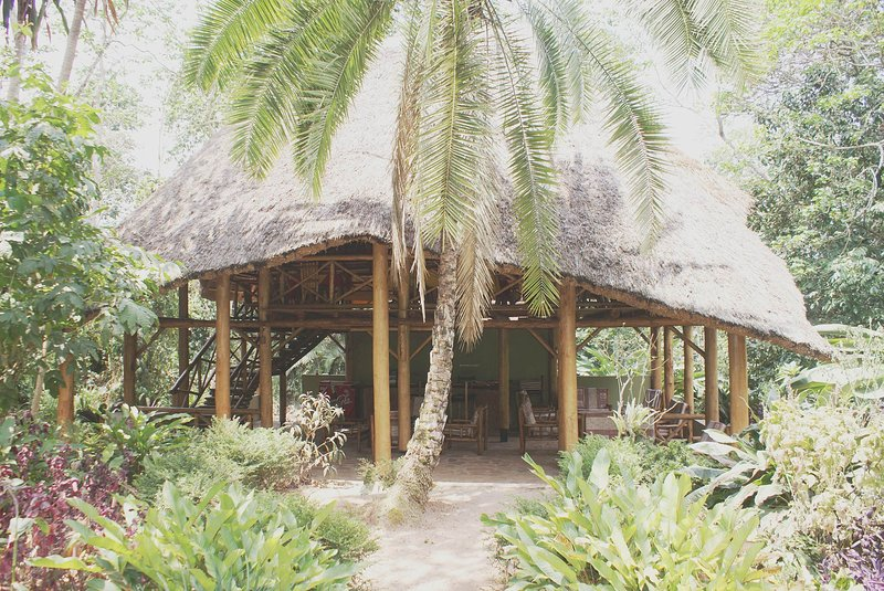Stay here and enjoy the beautiful forest atmoshere, vacation rental in Kibale National Park