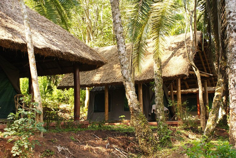 Stay in one of the tents at Kibale Forest Camp and have a relaxing experience, vacation rental in Kibale National Park
