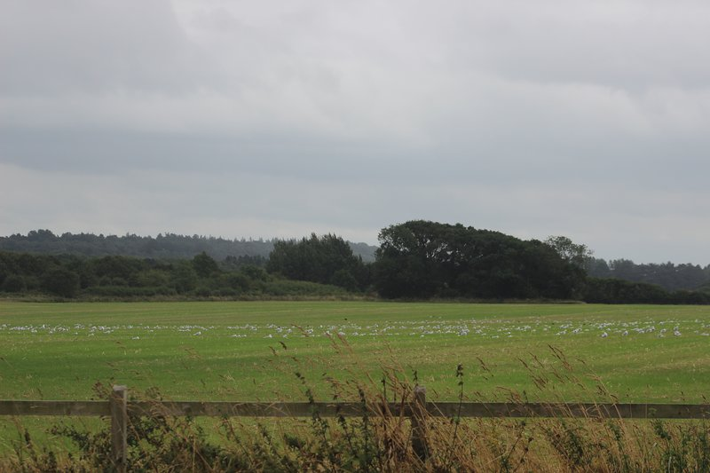 view across the nearby fields