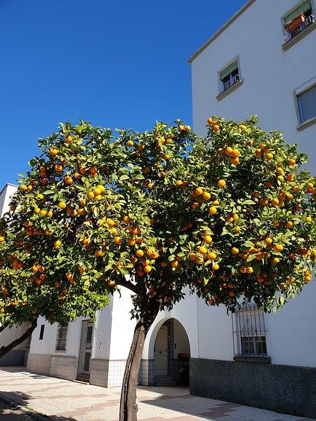 Appartement entouré d'orangers dans le quartier central de Málaga