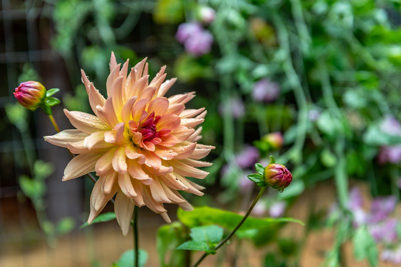 Choisissez des fleurs à savourer lors de votre séjour à la Villa Ondina.