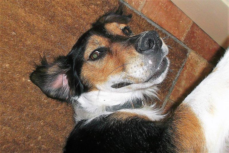Pepe är en av våra tre mycket vänliga hundar