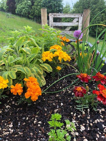 mini ört trädgård