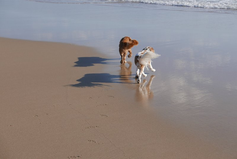 Grants Beach, 1 km from Black01. Dogs can run free on the north side.