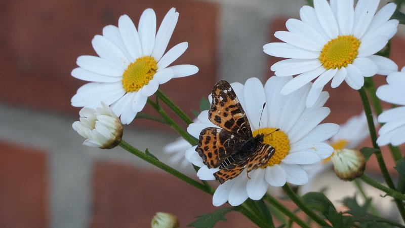 Ferienwohnung für  Ruhe und Aktive Inmitten der Natur, alquiler de vacaciones en Bleckede