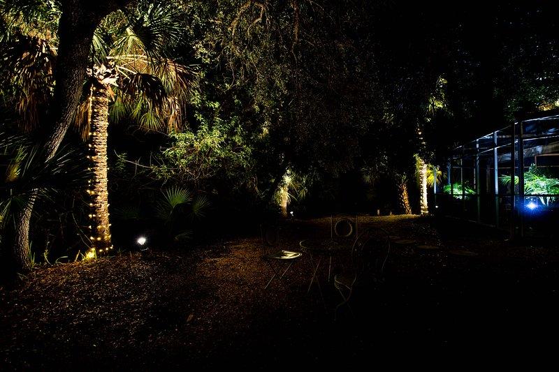 Lit palms make for a beautiful nighttime view