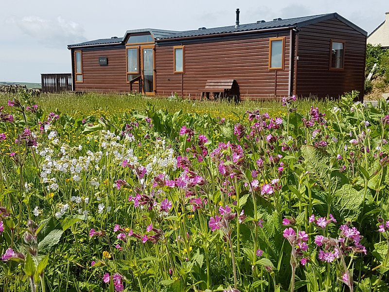 A Wildflower meadow is planted beside the lodge