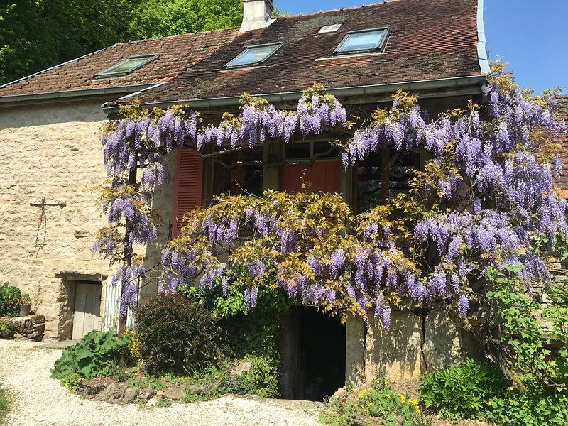 The Farmhouse covered in Wisteria in May