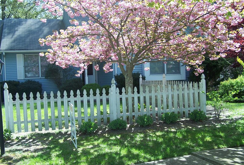 You'll love Ibis Place, holiday rental in North Cape May