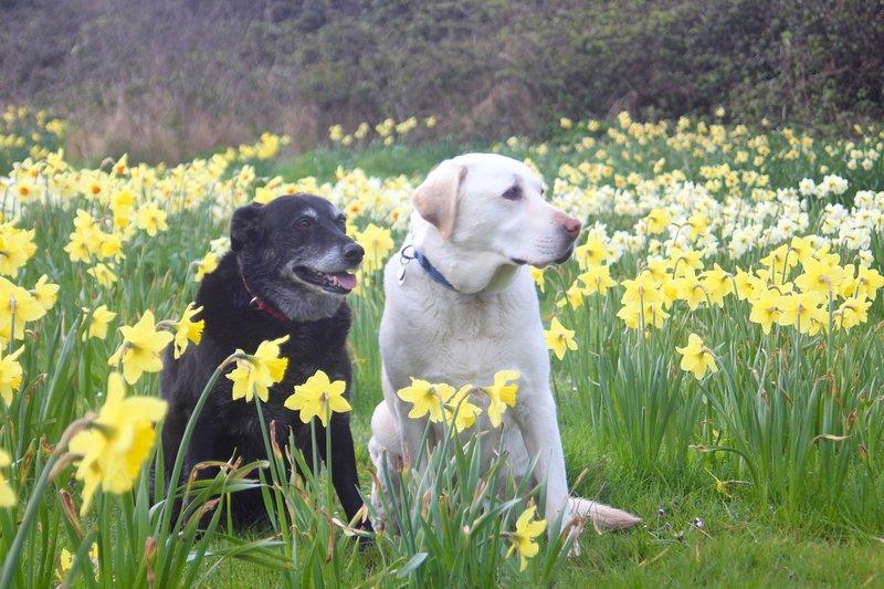 Monty y Flynn - perros de acogida