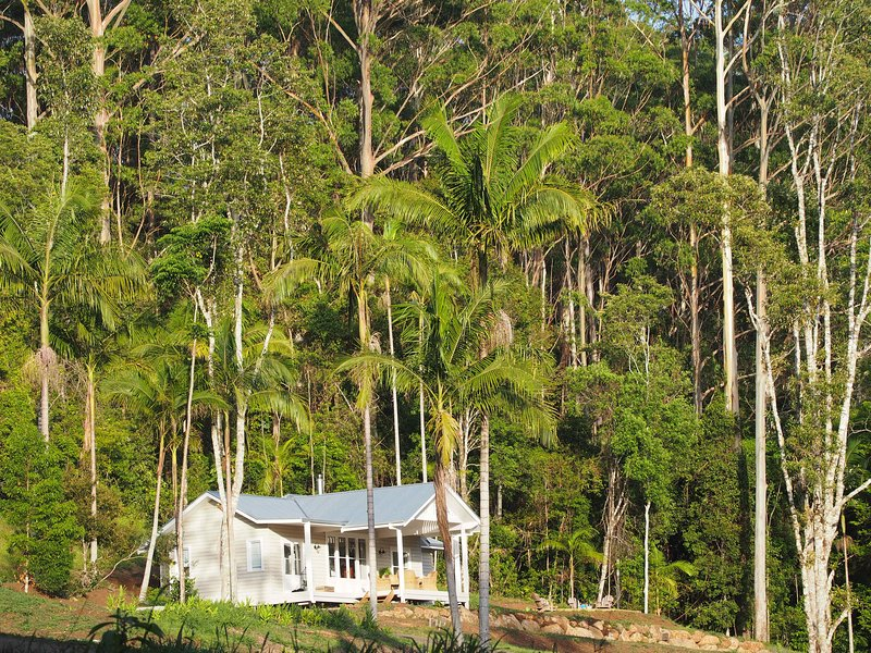 Blue Fig Cottage, Nightcap Ridge, Byron Hinterland, location de vacances à Wilsons Creek