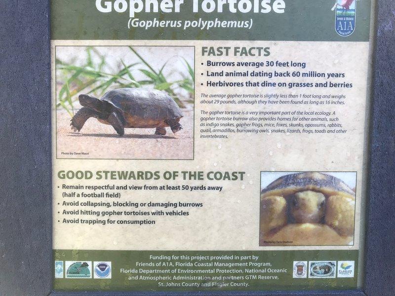 Nuestro patio delantero es un hábitat de tortuga Gopher.