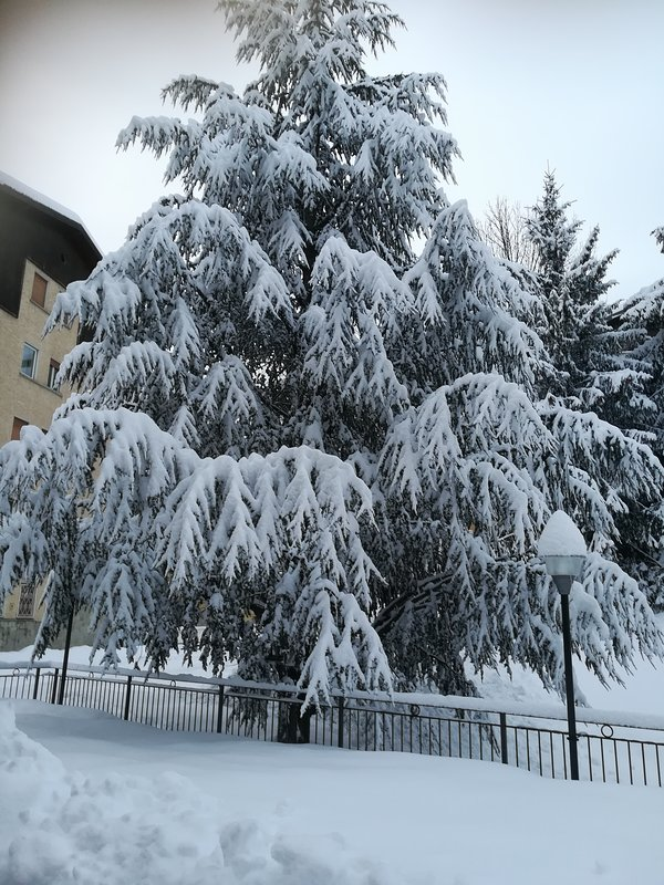 The splendid tree that is under the house, full of snow