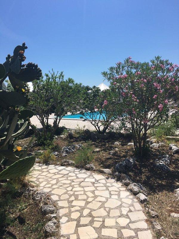 Vegetation in the pool