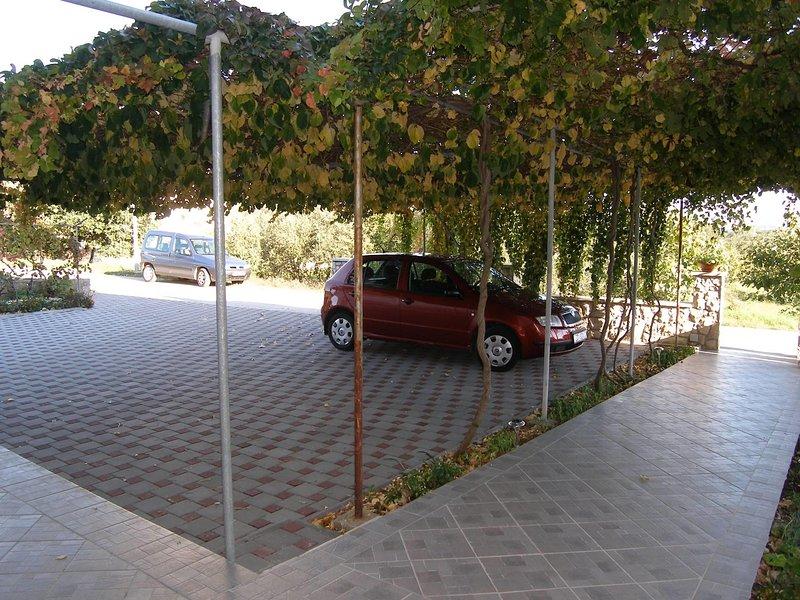 Chemin, transport, trottoir, dalle, arbre