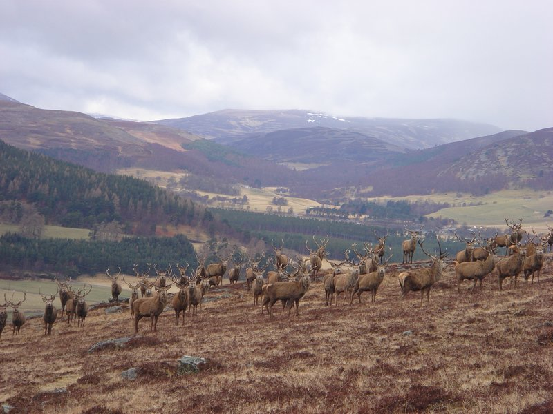 Antlers Cottage, vakantiewoning in Ballater