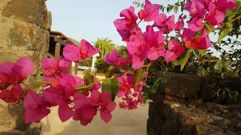Dammusi di pietra SOLE, casa vacanza a Pantelleria
