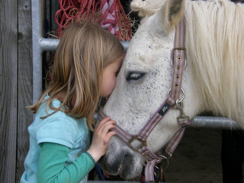 Jessie el pony es un gran favorito