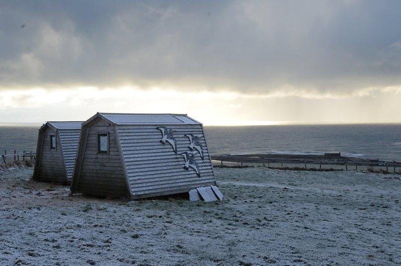 Oyster Catcher e Curlew nella neve!