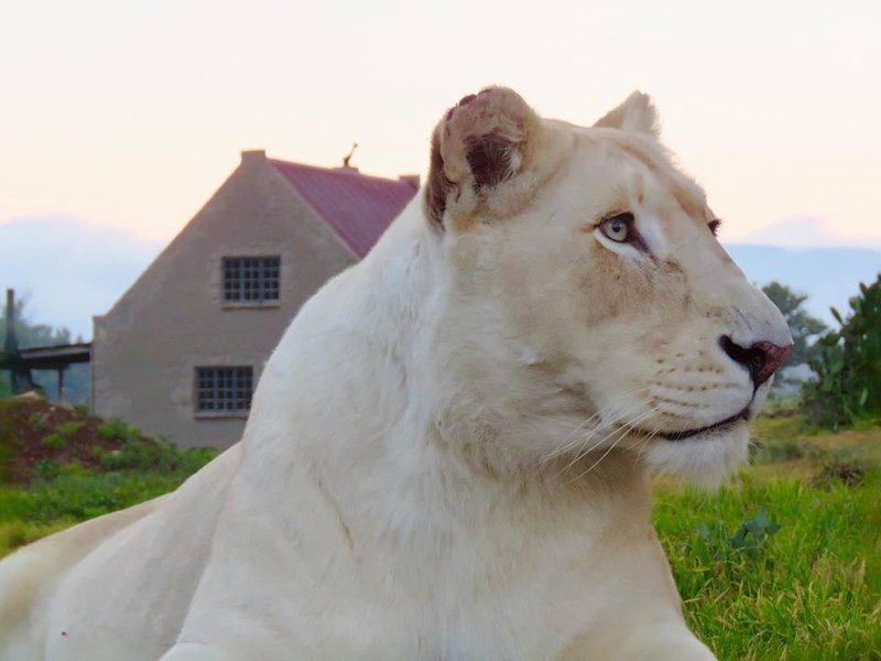 Lion House – semesterbostad i Free State
