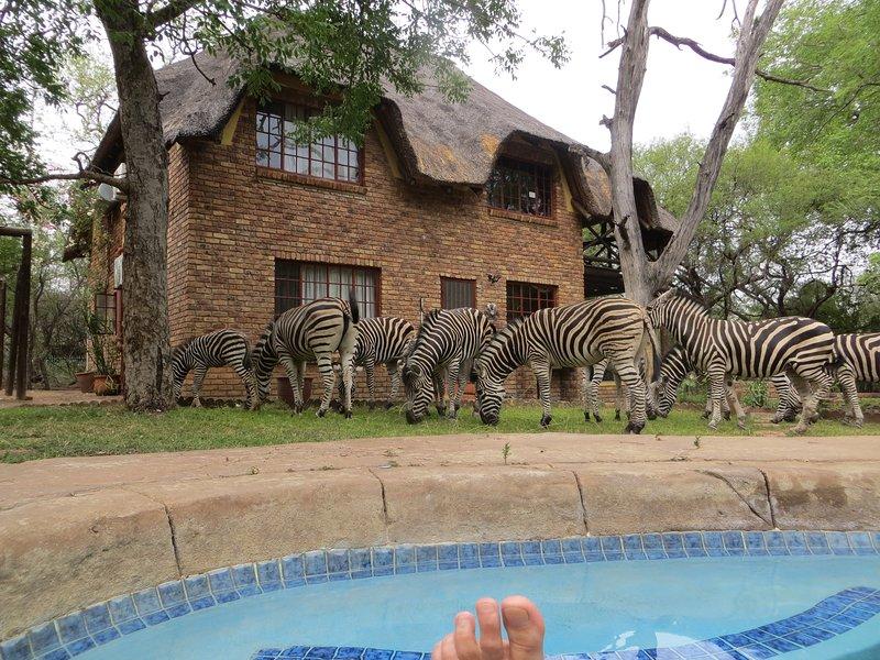 Rafikisresthouse : Kruger retreat, FAST free WIFI, nature walks, wildlife visits, holiday rental in Marloth Park