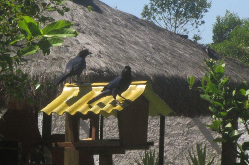 recanto das gralhas azul, vacation rental in Santinho