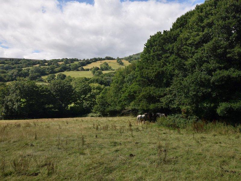 17 ettari di terreno con cavalli, galline e asini
