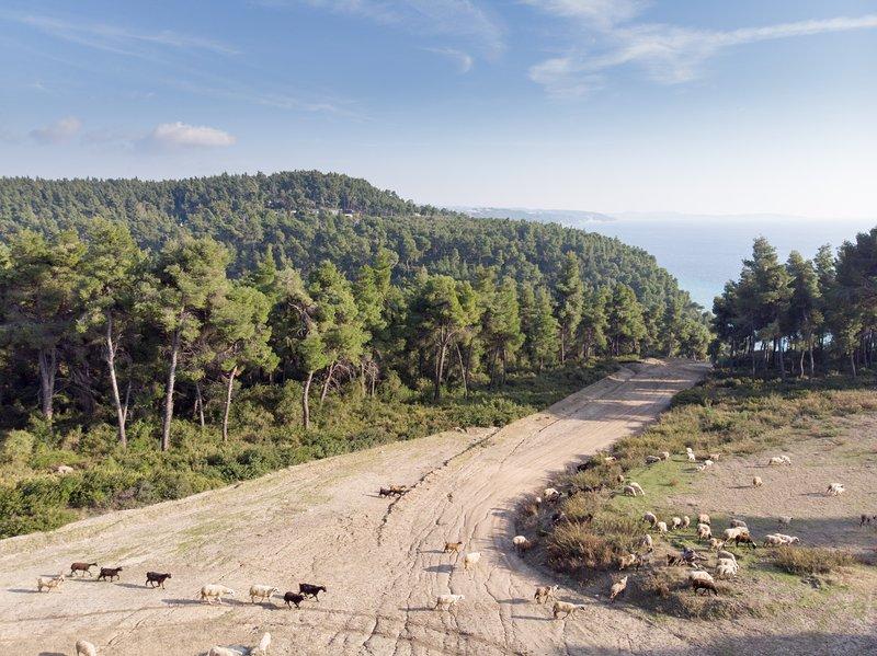 Strada per la vicina spiaggia di koutsoupia