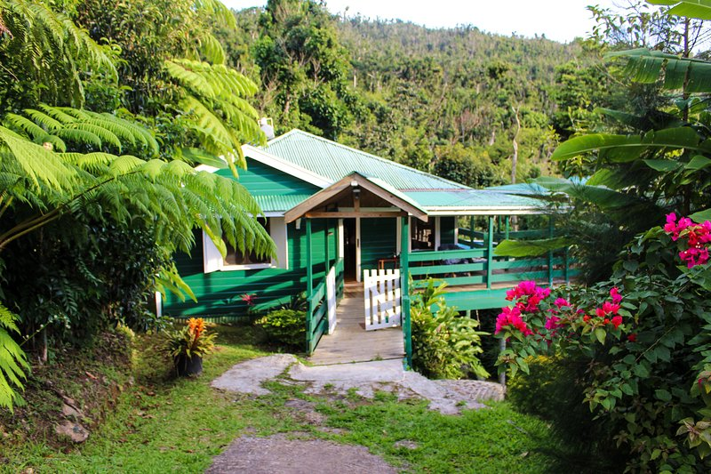 Birdwatchers Rainforest Cottage - Recovered from the Hurricane, holiday rental in Dominica