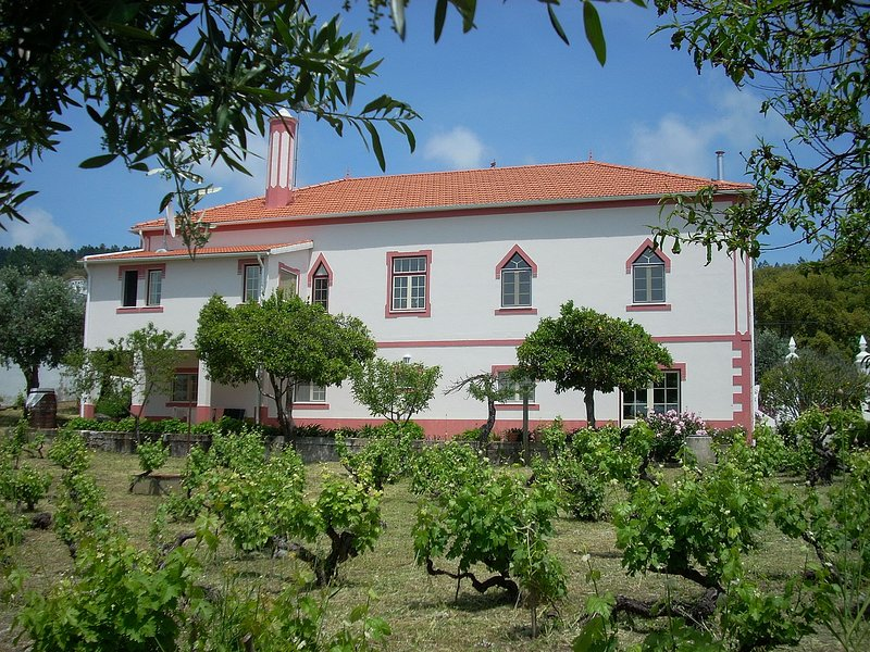 Quinta da Vila Maria viewed from the vineyard