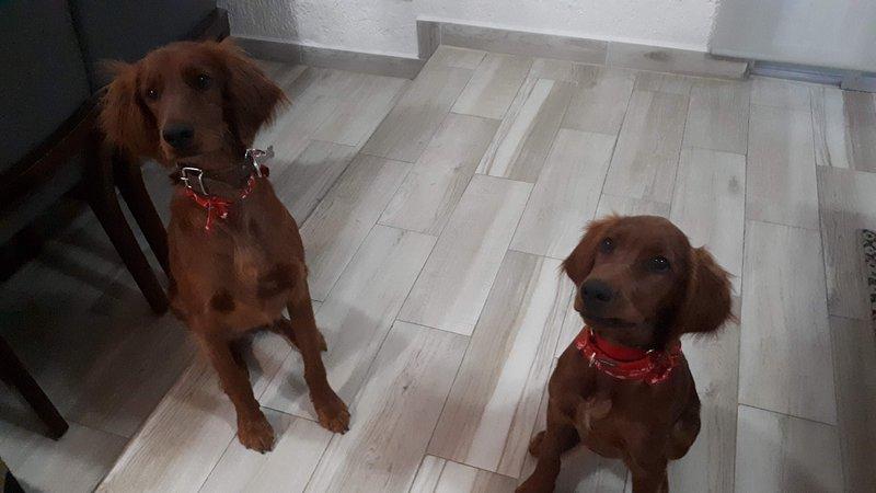 KORA & BELLA