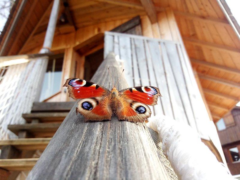 Cabane des Alpages, hébergement insolite dans un cadre idylique, Ferienwohnung in Doubs
