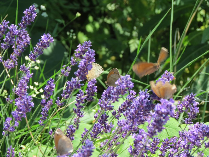haven for butterflies