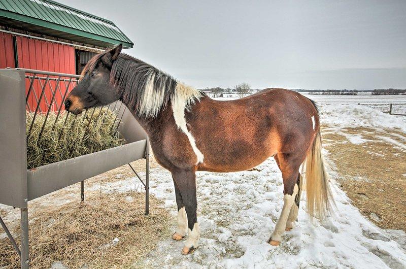 Dos hermosos caballos viven en la propiedad.