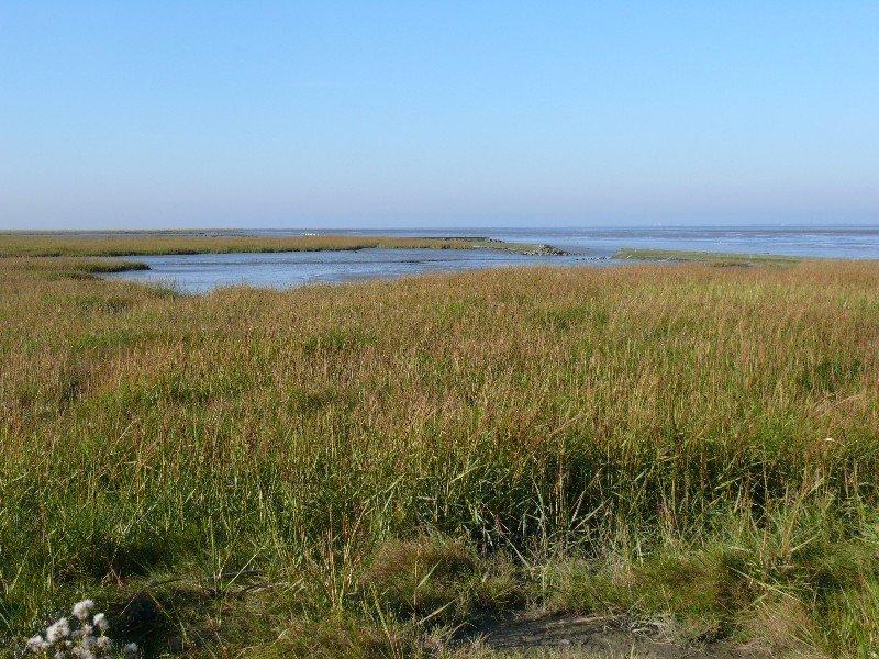 Patrimonio Mundial Mar de Wadden.