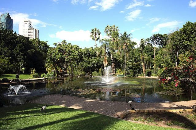 17 minutos en ferry (CityCat) a los jardines botánicos de la ciudad de Brisbane