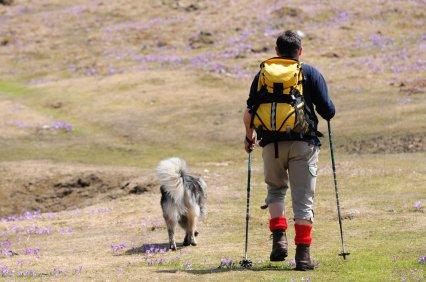 Vá andando com o seu cão na bela urze North Yorkshire Moors.