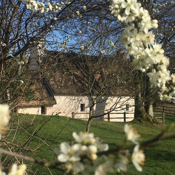 17th century thatched cottage also available with hot-tub & garden, sleeps 4. See separate listing.