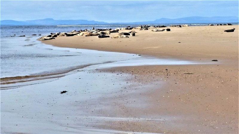Tätningar på Findhorn Beach