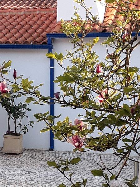 Magnolia del patio